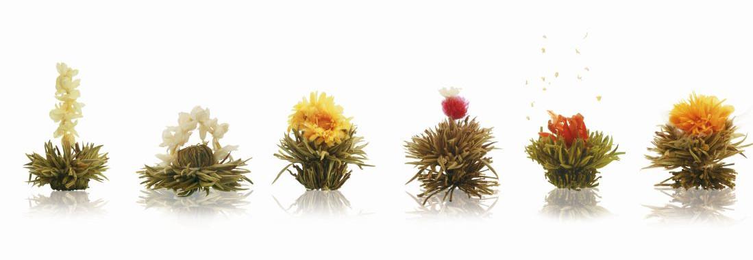 Erblüh Tee - Teeblumen