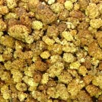 Maulbeeren BIO, naturbelassen, getrocknet